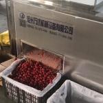 New type cherry pitting machine/pitter equipment